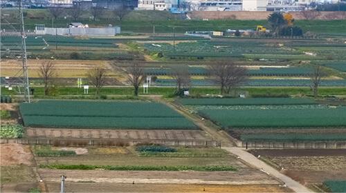 カネキ近藤農園
